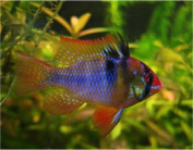 colourful-fish-newsletter-june-2016