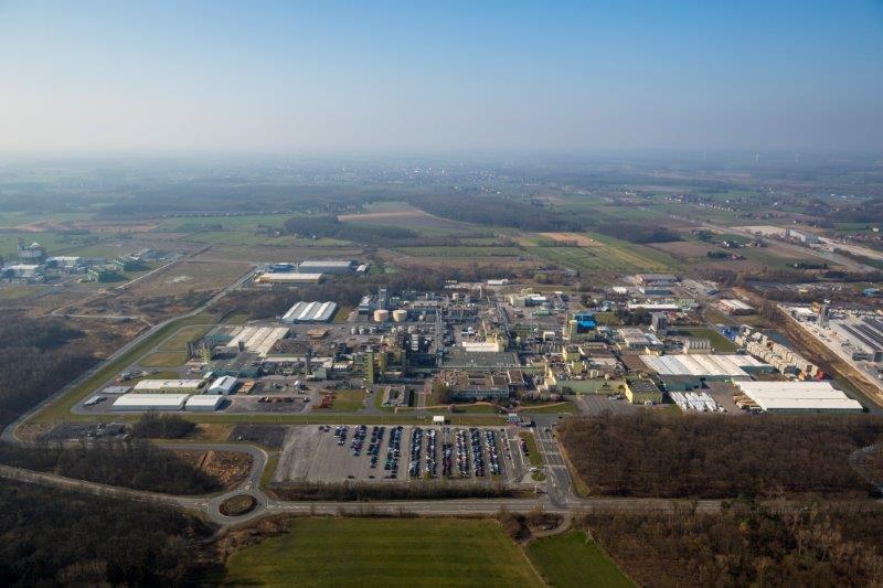 Everlam_plant in Germany2.jpg